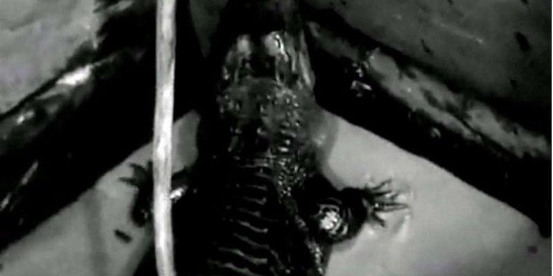 Krokodyl Herman