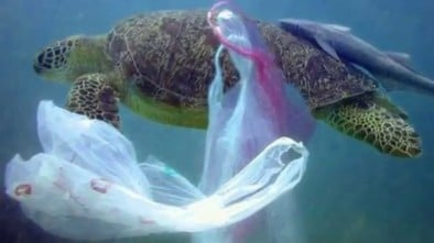 żółw plastik